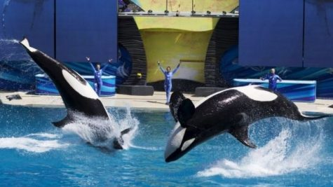 SeaWorld closing its famous Orca show