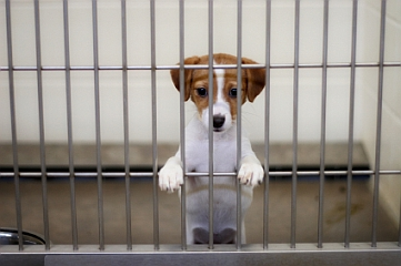 5 Reasons To Adopt Your Dog From A Shelter