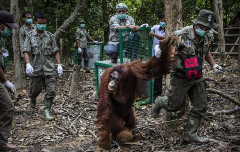 Refuge for Orangutans
