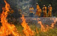 The Australia Fires