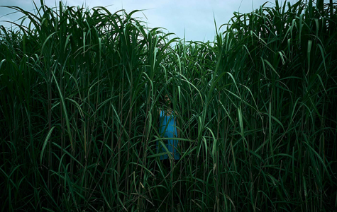 Movie Review: In The Tall Grass